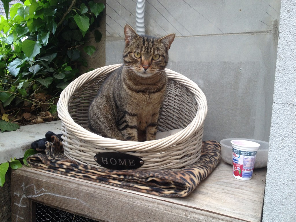 pelíšky pro kočky