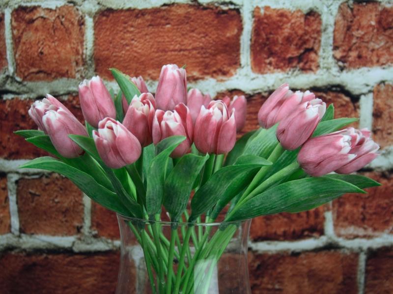 Francouzský tulipán