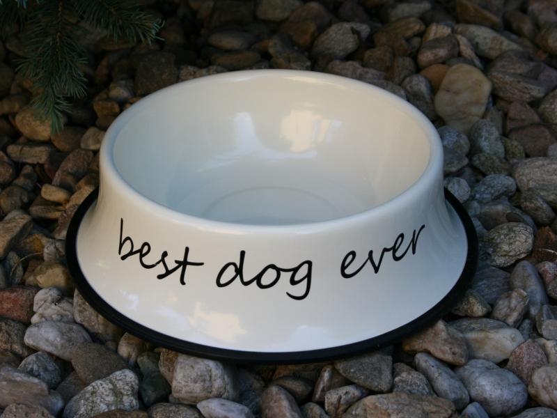 miska pro psa BEST DOG EVER